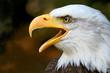 Fototapeta Biały - Dorosły - Ptak