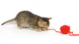 Kitten playing with yarn poster