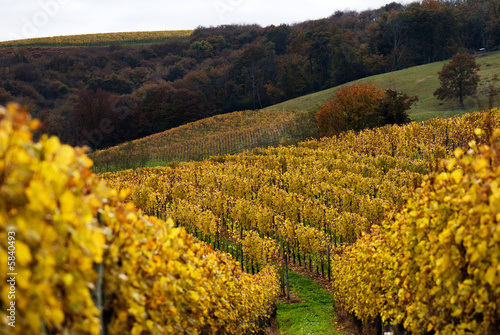 The vineyards in the Jurancon region of Southwest France