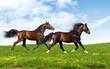 Fototapeten,pferd,reiter,tier,einhufer