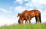 mare and foal in a field - realistic photomontage poster