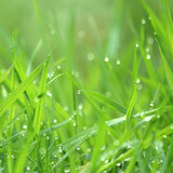 Drippy grass background, swallow depth of field poster
