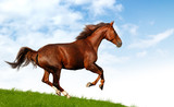 sorrel mare gallops - realistic photomontage poster
