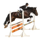 show jumping - isolated on white
