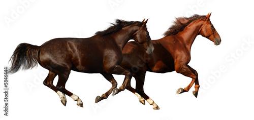 Fototapeten,pferd,reiten,tier,equine