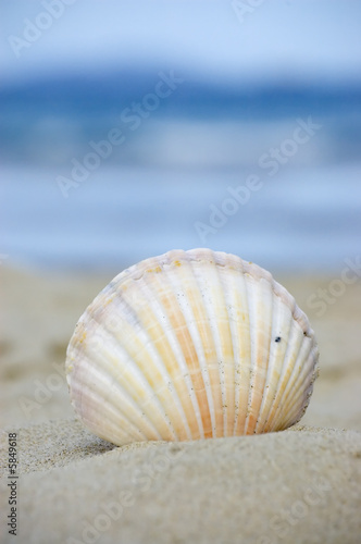 Summer and vacation concept. Seashell at the beach.