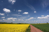 Rural landscape - gravel route and yellow canola field scenery poster