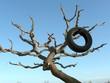 Pneu usagé dans un arbre