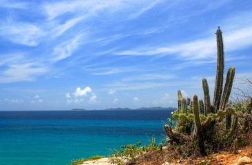 view on los frailes, venezuela, with cactus