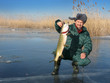 Russian fisher on ice with catched pike