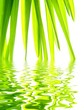 Close-up of fresh green straws reflected in water