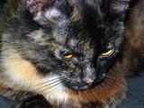 Depressive Cat poster