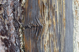 Texture of closeup of damaged rotten wood poster