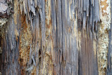 Texture made of closeup of old, rotten wood poster