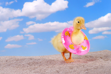 Baby Duck Wearing a Life Preserver on the Beach