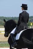 equestrian woman riding black stallion horse poster