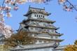 Sakura blossom at Himeji castle