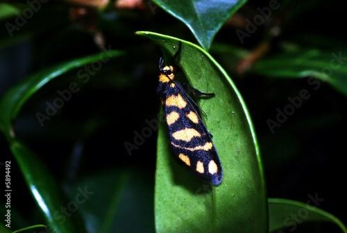 moth macro 31