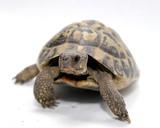 Fototapete Winterschlaf - Marino - Reptilien / Amphibien