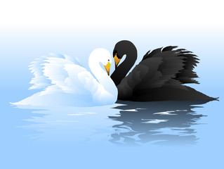 White and black swans couple