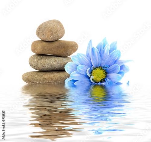 therapy stones with flowers isolated