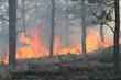 Forest Fire Flames - 5908240