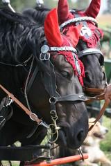Pferd mit Ohrenschmuck