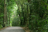 Rainforest in Pulau Ubin (Granite Island), Singapore poster