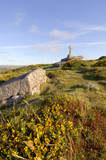 Granite cross on Dartmoor in beautiful summer evening light