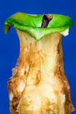 Isolated apple eaten to the core. Top apple stump poster