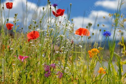 kolorowe-kwiaty
