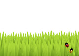Ladybirds in the grass poster