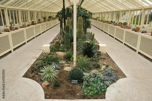 cacti glasshouse