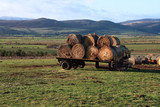 View to the Cheviots with some hale bales in the foreground poster