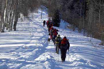 Big snowshoer group climbing in winter birch forest