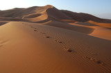 Human footsteps in the sand in the Sahara Desert, Morocco poster