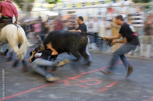 Staande foto Stierenvechten Spectacle taurin : course de taureau