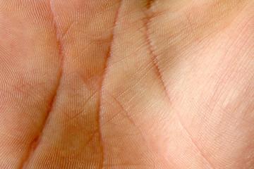 Human hand skin