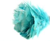Close up of the blue feathers of a feather duster. poster