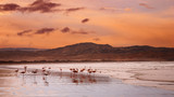Flamingoes on the beach, Atlantic coast of Namibia poster