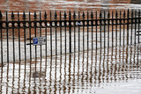 Reflections of railings as River Ouse bursts its banks. York. poster