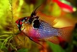 Fototapete Aquarium - Fisch - Fische