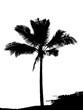 illustration de cocotier noir sur fond blanc