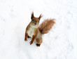 Squirrel on a snow expecting for an entertainment from people