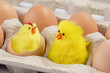 Leinwandbild Motiv Zwei Spielzeugkueken im Eierkarton