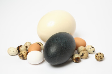 Ostrich, emu, chicken, and quail eggs.