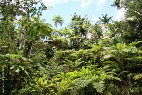 Deurstickers Centraal-Amerika Landen Lush Jungle