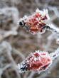 eiskristalle an früchten