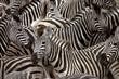 Leinwandbild Motiv zebras 2