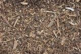 Organic texture of the ground with wood particles poster